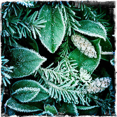 Photograph - Morning Frost by Randy Green