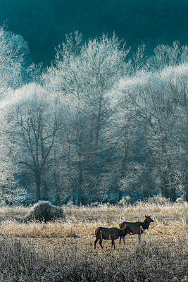 Wall Art - Photograph - Morning Frost by Scott Hafer