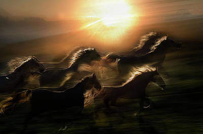Motion Photograph - Morning  Gallop by Milan Malovrh