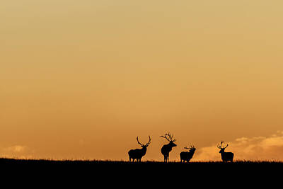 Photograph - Morning Gathering by Scott Bean