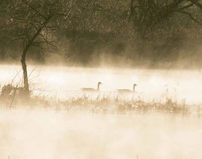 Photograph - Morning Geese by Kathryn Whitaker
