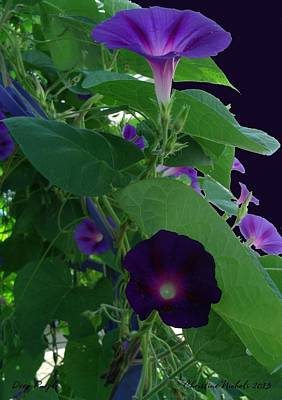 Photograph - Morning Glories by Christine Nichols