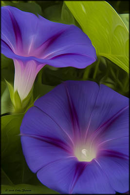 Photograph - Morning Glories by Erika Fawcett