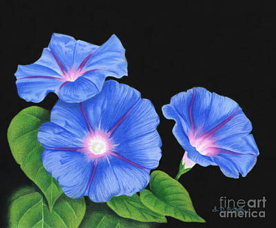 Greetings Card Drawing - Morning Glories On Black by Sarah Batalka