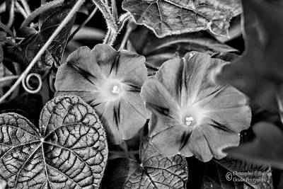Photograph - Morning Glory - Bw by Christopher Holmes