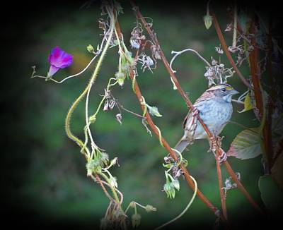 Photograph - Morning Glory And Sparrow by MTBobbins Photography