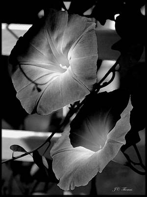 Photograph - Morning Glory  Flowers by James C Thomas