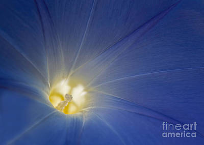 Photograph - Morning Glory Illumination by Barbara McMahon