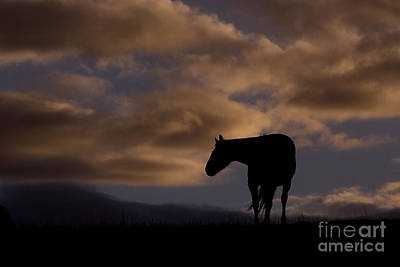Working Cowboy Photograph - Morning Glory by Nikole Morgan
