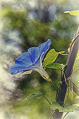 Photograph - Morning Glory by Paul Miller