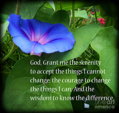 Photograph - Morning Glory Serenity Prayer by Eva Thomas