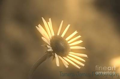 Photograph - Morning Glory by Tamera James