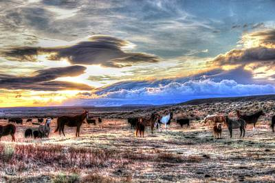 Renewing Photograph - Morning Glory by Vikki Correll