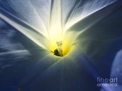 Photograph - Morning Glory Visitor 2 by Janet Otto