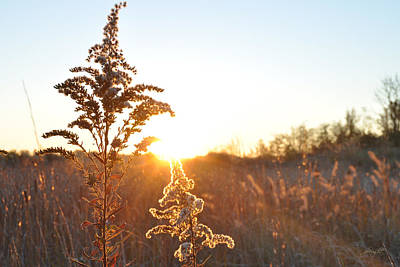 Photograph - Morning Glow - West Virginia by Paulette B Wright