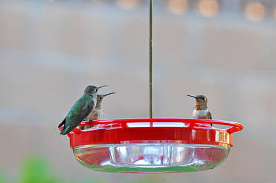 Hummingbirds Photograph - Morning Gossip by Lynn Bauer