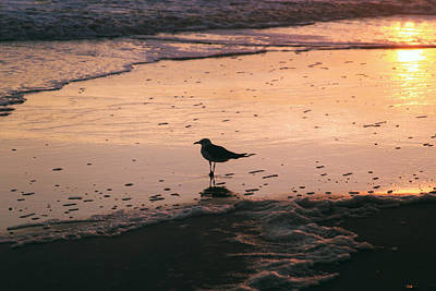 Photograph - Morning Gull II by Pete Federico