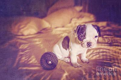 Adorable French Bulldog Puppy Photograph - Morning Has Broken by Danilo Piccioni