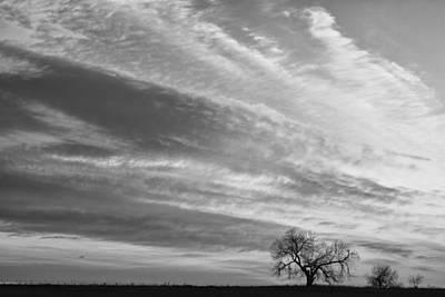 Country Photograph - Morning Has Broken Three Trees Bw by James BO  Insogna