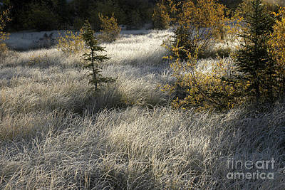 Photograph - Morning Hoar Frost by Jessie Parker