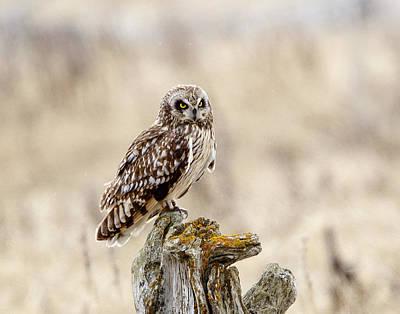 Photograph - Morning Hunter by Doug Lloyd