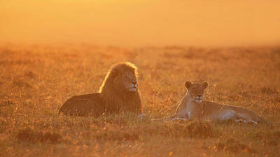 Kenya Wall Art - Photograph - Morning In Africa by Phillip Chang