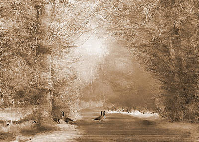 Photograph - Morning In Eden In Sepia by I'ina Van Lawick