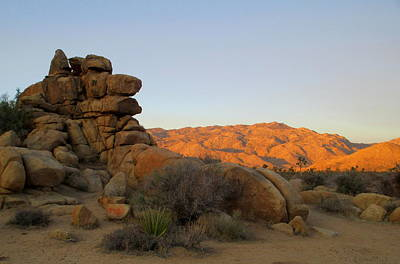 Photograph - Morning In Joshua Tree 2 by Randall Weidner