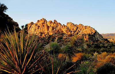 Photograph - Morning In Joshua Tree 4 by Randall Weidner