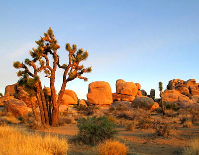 Photograph - Morning In Joshua Tree 5 by Randall Weidner