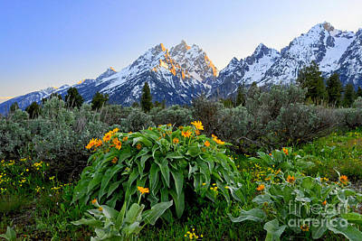Photograph - Morning In Teton by Deby Dixon