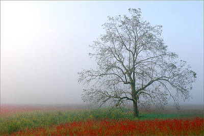 Art Print featuring the photograph Morning In The Meadow by Wendell Thompson