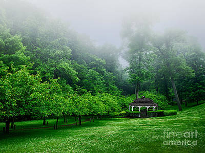 Small Forest. Beauty Photograph - Morning In The Park by Mark Miller