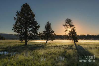 Morning Light In Yellowstone Art Print by Sandra Bronstein