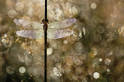 Dragonfly Photograph - Morning Light by Rob Blanken