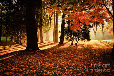 Morning Light Through The Trees Original by Michael Hrysko