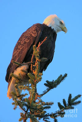 Photograph - Morning Lookout by Frank Townsley