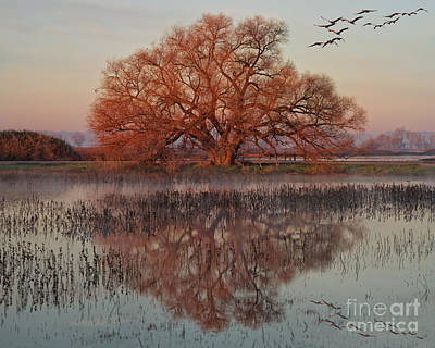 Photograph - Morning Magic by Beth Sargent
