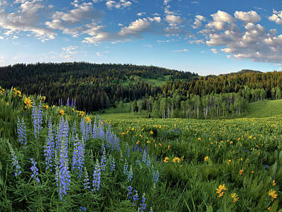 Caribou Photograph - Morning Meadow by Leland D Howard