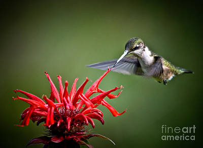 Photograph - Morning Meal by Cheryl Baxter
