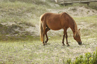 Glass Eyed Pony Photograph - Morning Meal by Lyndsey Warren