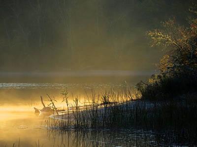 Morning Mist Art Print by Dianne Cowen