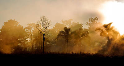 Photograph - Morning Mist by Nicholas Blackwell