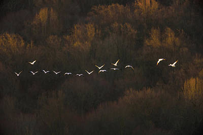 Geese Wall Art - Photograph - Morning Mood by ??? / Austin