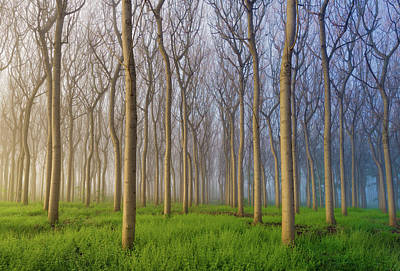 Symmetrical Photograph - Morning Of The Forest by Andy Chan