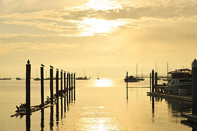 Sausalito Photograph - Morning On The Bay by Maria Perry
