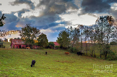 Photograph - Morning On The Farm Four by Ken Frischkorn