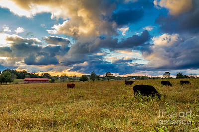 Photograph - Morning On The Farm Two by Ken Frischkorn
