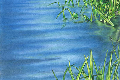 Drawing - Morning On The Pond by Troy Levesque