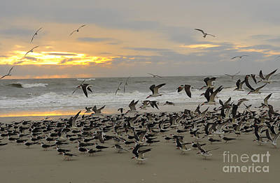 Photograph - Morning On Tybee Island by Nancy Greenland